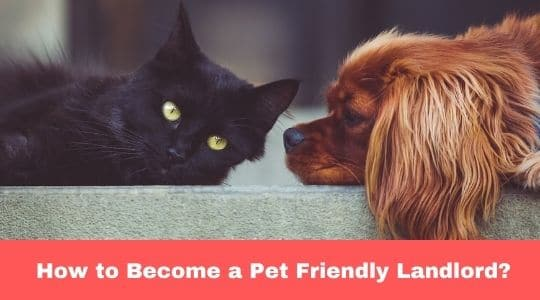 Pet-Friendly-Landlord